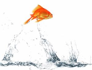 Acquario. Una fuga